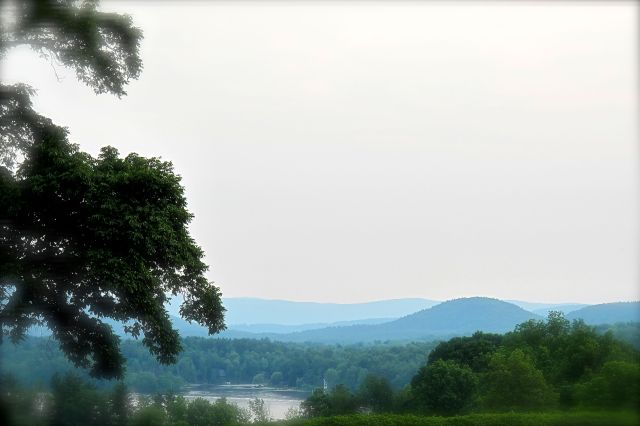 Tanglewood View